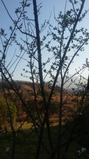 Spring in the Berg